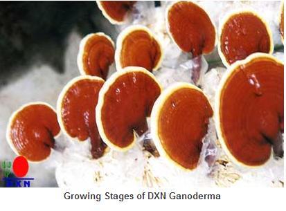 A vörös kaviár előnyei és hátrányai. A vörös kaviár előnyei és hasznos tulajdonságai