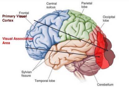 Hypertoniás (hipertóniás-hidrokefal) szindróma gyermekek és felnőttek esetében - okok és kezelés
