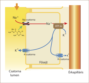 diuretikumok a hipertónia mellékhatásai