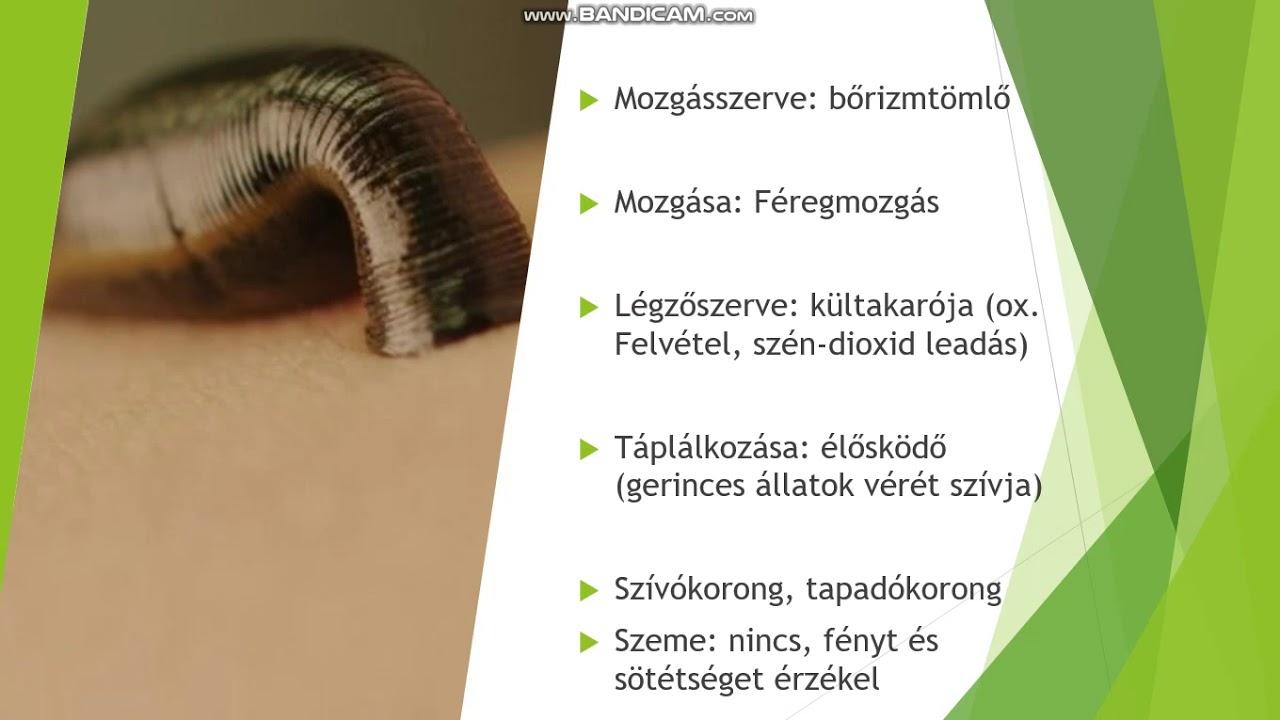 hirudoterápia hipertónia vélemények)