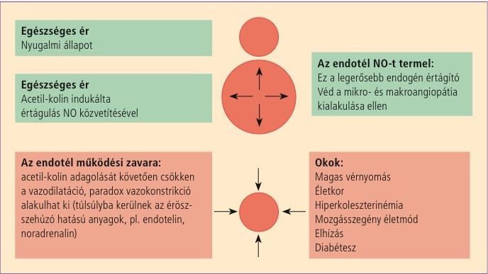 magas vérnyomás hiperkoleszterinémia)