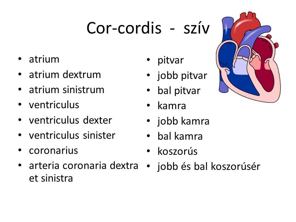 Szívmegnagyobbodás tünetei és kezelése