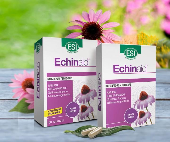 Az Echinacea Gyógynövény Vérnyomás hatása