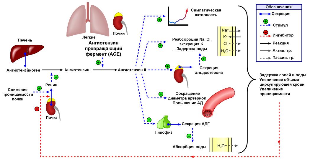 magas vérnyomás 1 fokos tachycardia cukorbetegséggel járó magas vérnyomás népi gyógymódjainak kezelése