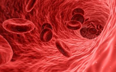 magas vérnyomás vörösvértestek a vizeletben
