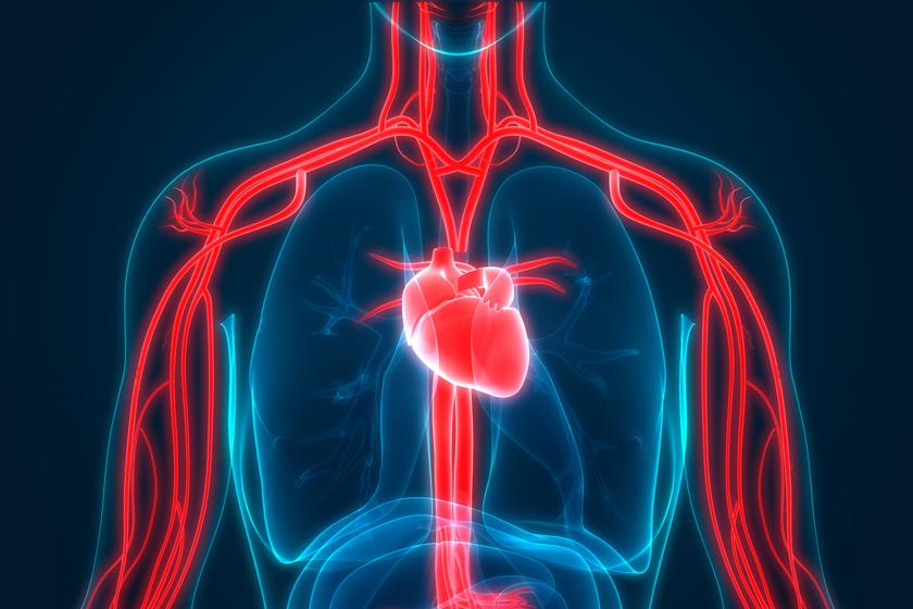 magas vérnyomás gyötri
