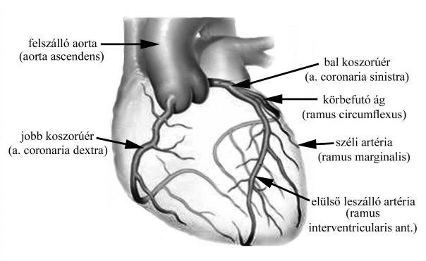 magas vérnyomás esetén az erek keskenyek vagy kitágulnak