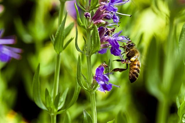 mezei méh a magas vérnyomásból sürgősségi ellátás hipertónia algoritmus