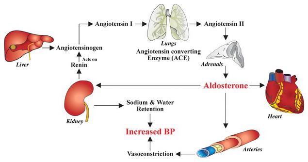 magas vérnyomás II
