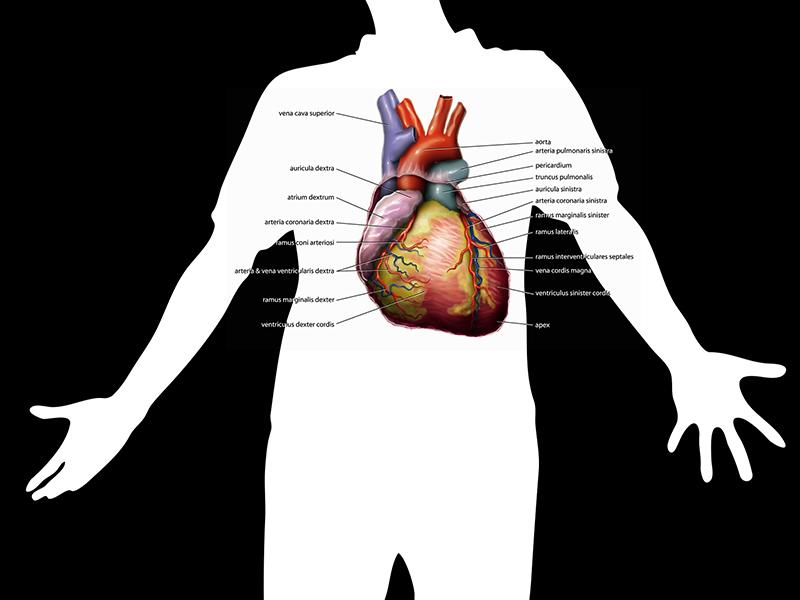Pulmonális hipertónia - Tudástár