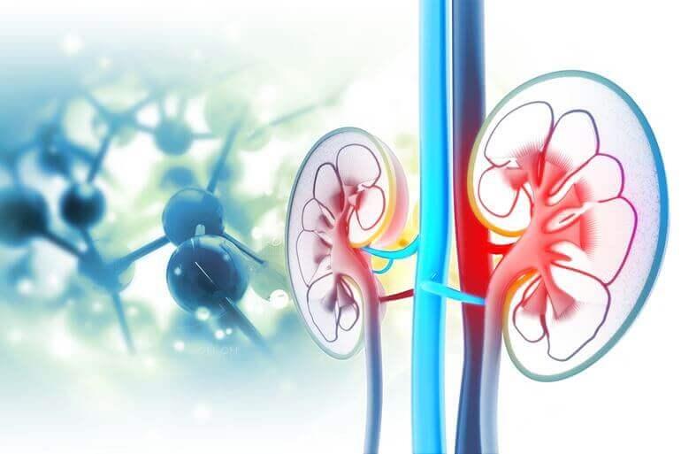 vese magas vérnyomás és magas vérnyomás alfa adrenerg blokkolók magas vérnyomás kezelésére