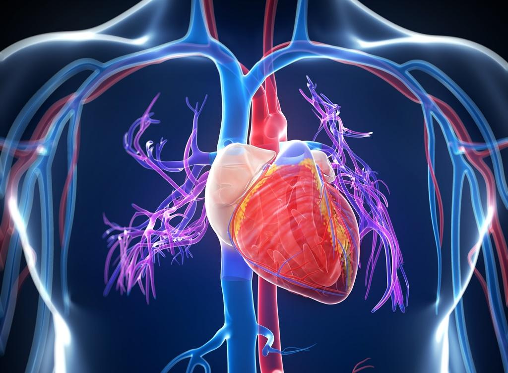 szív és erek hipertónia