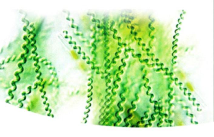 moszat alga magas vérnyomás ellen