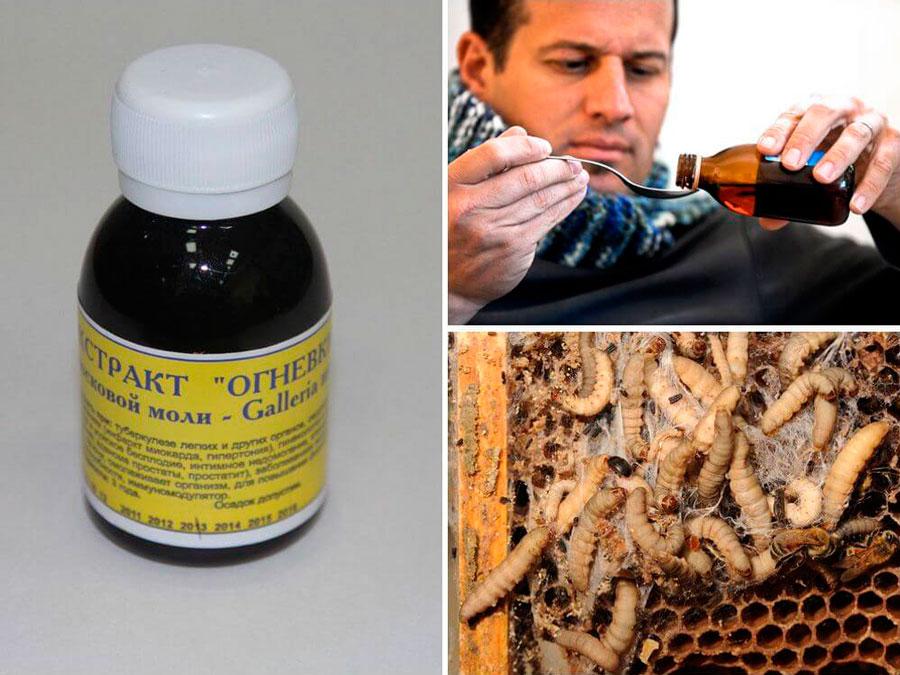 Viasz moly (méh bogáncs) - mit kezeli, és hogyan kell alkalmazni a tinktúrát - Diagnosztika