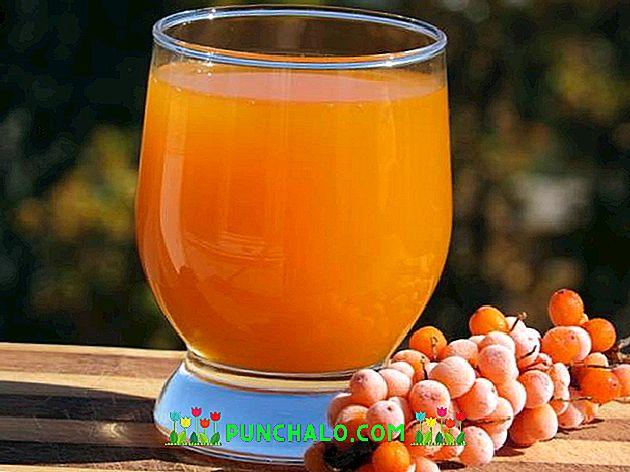 Homoktövis, gyümölcsének hatóanyagai, Hippophae rhamnoides | rockwellklub.hu