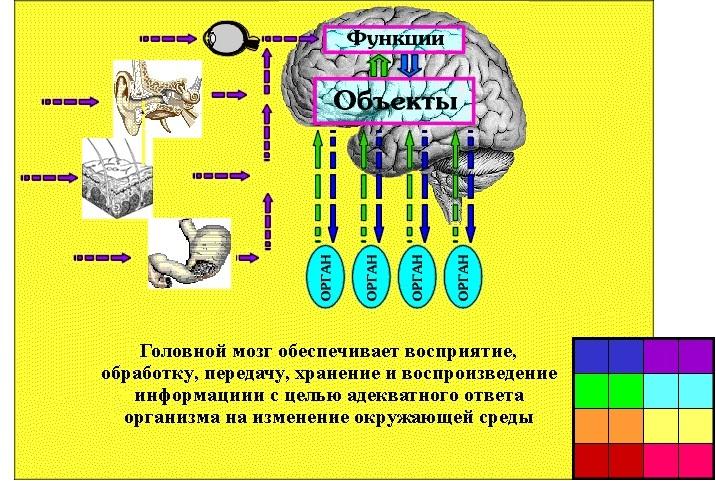 mi vezet az agy hipertóniájához)