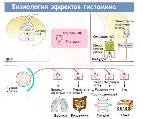 Hipotenzió kezelésére szolgáló gyógyszerek